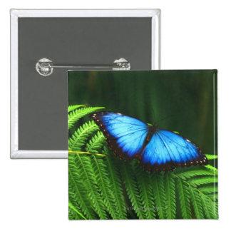 mariposa pin cuadrado