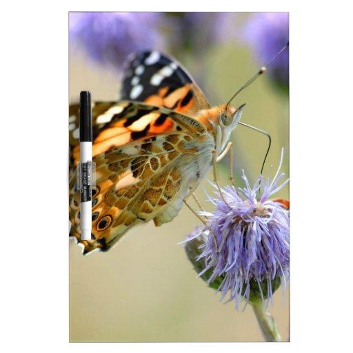 Mariposa pintada de la señora que alimenta en la f tablero blanco