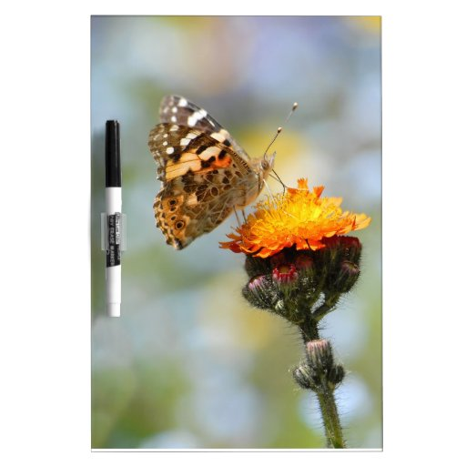 Mariposa pintada de la señora que alimenta en la f pizarras blancas de calidad