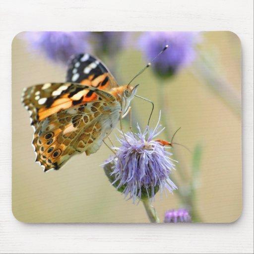 Mariposa pintada de la señora que alimenta en la f alfombrillas de raton