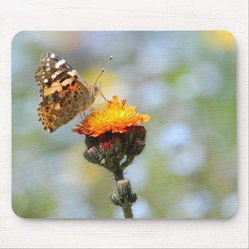 Mariposa pintada de la señora que alimenta en la f tapete de raton