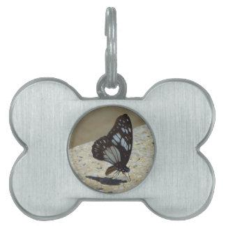 mariposa placa mascota