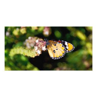 Mariposa Plantilla Para Tarjeta De Foto