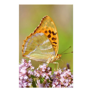 mariposa Plata-lavada del Fritillary en la flor Papeleria