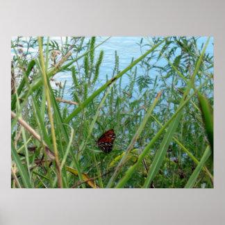 Mariposa por el río póster