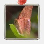 Mariposa preciosa adorno para reyes