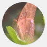 Mariposa preciosa etiqueta redonda