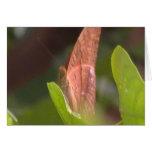 Mariposa preciosa felicitaciones