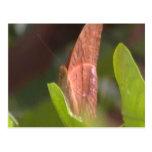 Mariposa preciosa postales