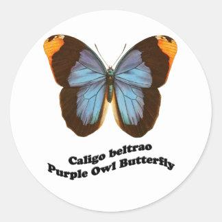 Mariposa púrpura del búho pegatina redonda
