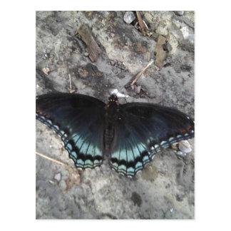 mariposa púrpura rojo-manchada tarjetas postales