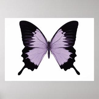 Mariposa púrpura y negra grande póster