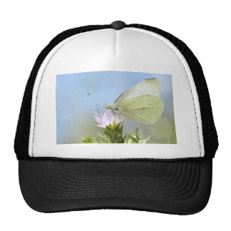 Mariposa que alimenta en la flor gorros