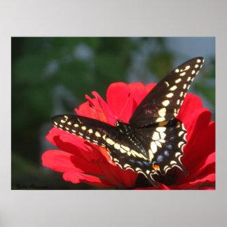 Mariposa que broncea poster