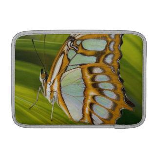 Mariposa que descansa sobre la hoja funda macbook air