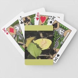 Mariposa que oculta detrás de naipes de una hoja barajas de cartas