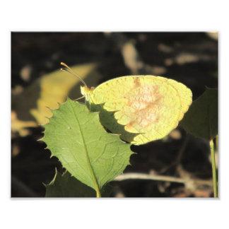 Mariposa que oculta detrás de una hoja fotografía