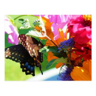 Mariposa que piensa en usted postal