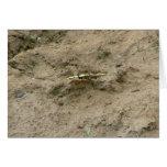 Mariposa que pudela del fango tarjetón