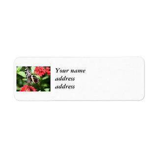 Mariposa rayada de la cebra etiqueta de remitente