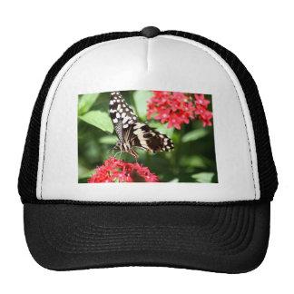 Mariposa rayada de la cebra gorros