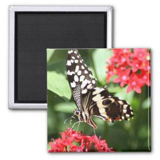 Mariposa rayada de la cebra iman de nevera