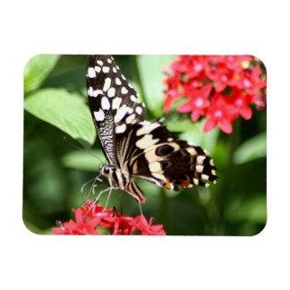 Mariposa rayada de la cebra imán