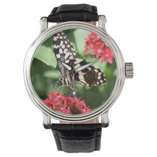 Mariposa rayada de la cebra relojes de mano