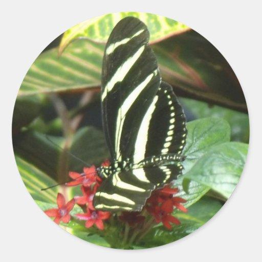 Mariposa rayada etiqueta redonda