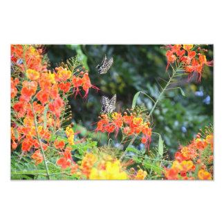 Mariposa rayada tigre en la impresión roja de enca fotos