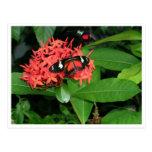 Mariposa roja bonita postal