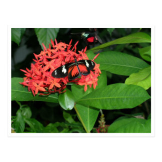 Mariposa roja bonita tarjetas postales