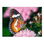 mariposa roja del lacewing de las mariposas tarjeta postal