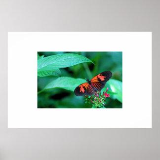 Mariposa roja y negra poster