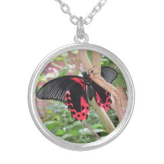 Mariposa rosada y negra en el collar de la rama
