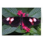 mariposa rosada y negra tarjeton