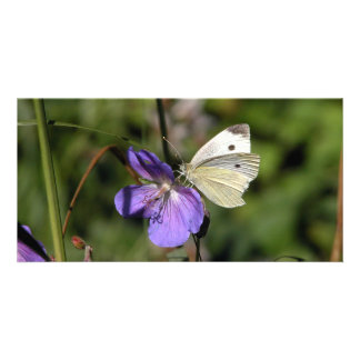 Mariposa saludo tarjeta fotográfica