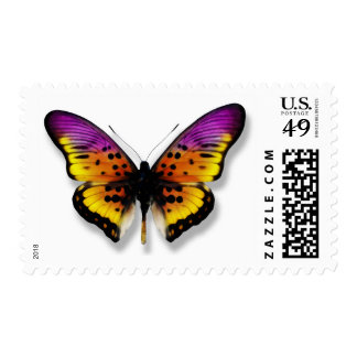 Mariposa Envio