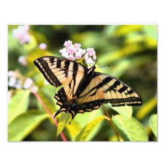 Mariposa soleada cojinete