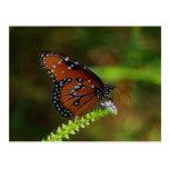 Mariposa soy postal