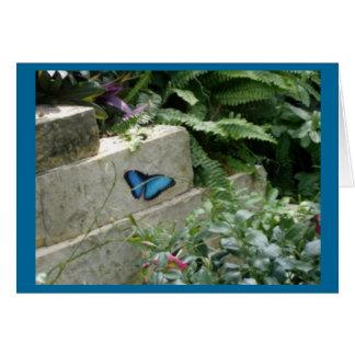 Mariposa Felicitación