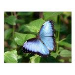mariposa tarjetas postales