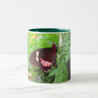 mariposa taza dos tonos