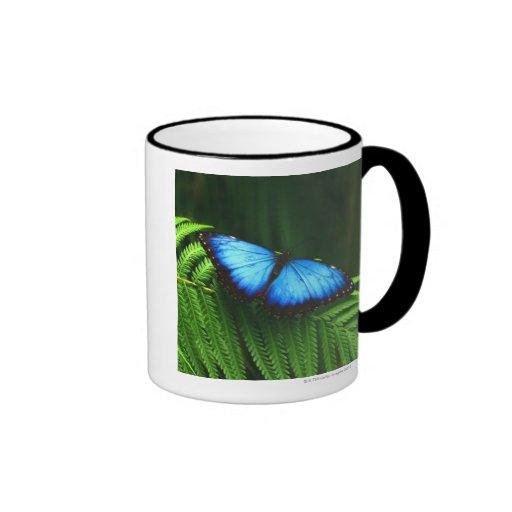 mariposa tazas de café