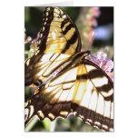 Mariposa - tigre del este Swallowtail Felicitacion