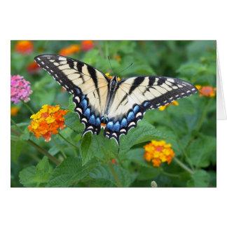 Mariposa - tigre del este Swallowtail Tarjeton