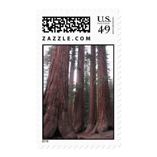 mariposa trees postage stamp