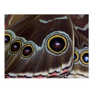 Mariposa tropical 12 de Sammamish Washington Postal