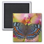 Mariposa tropical 2 de Sammamish Washington Imán De Frigorifico