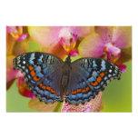 Mariposa tropical 4 de Sammamish Washington Foto
